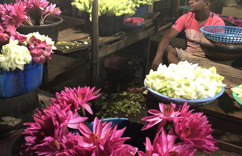 Flowers – lotus:mixed537