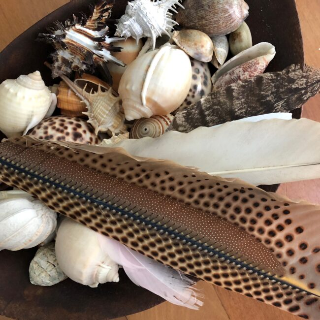 Shells and Feathers – an abundance of wealth
